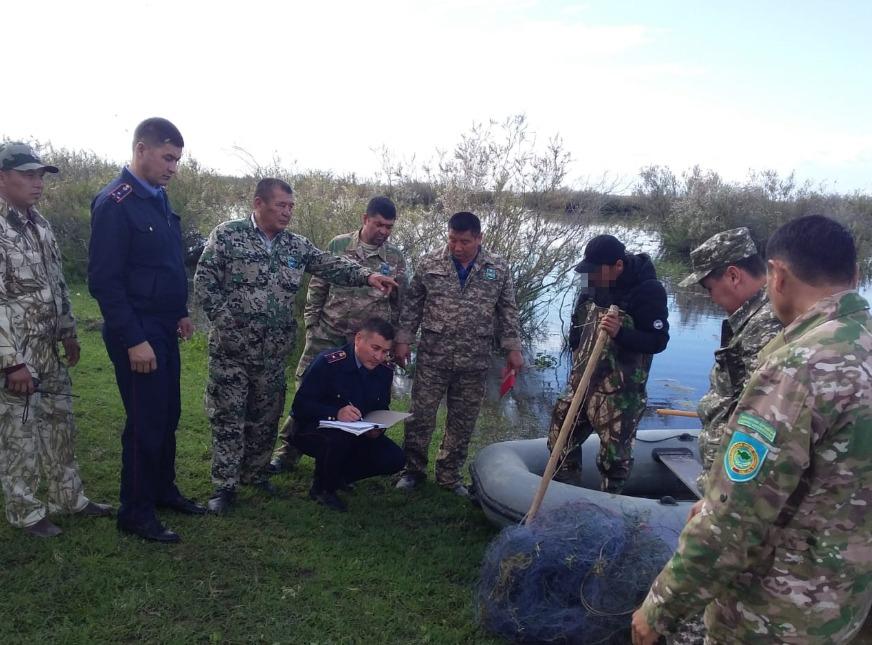 Шардаралық полицейлер 300 келі заңсыз балық аулаған күдіктілерді ұстады