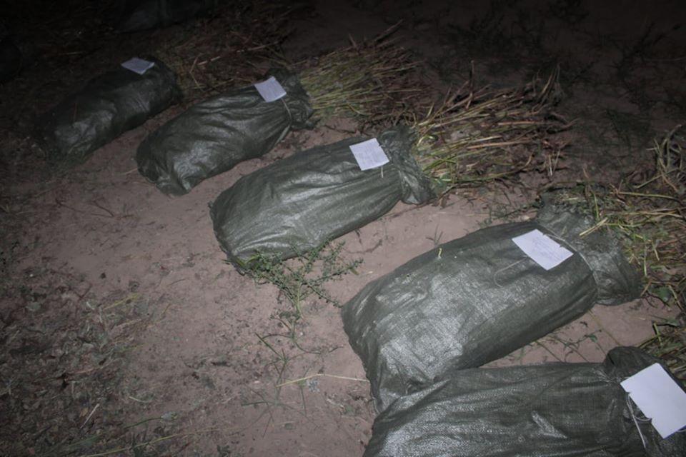 Түркістан облысы полицейлері 4730 түп көкнәр тәркіледі